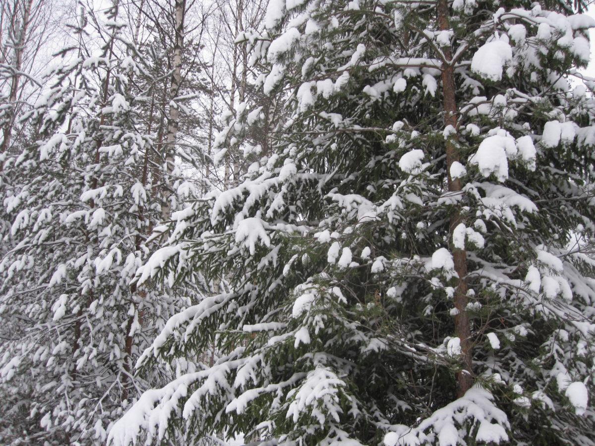 Lumisessa metsässä, ruuhkatreeni