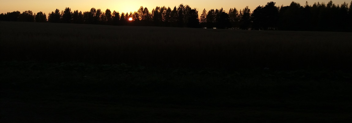 Kokemus öisellä metsäpolulla