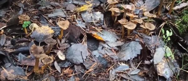 Entä sienirihmastot, kuinka voitte ?